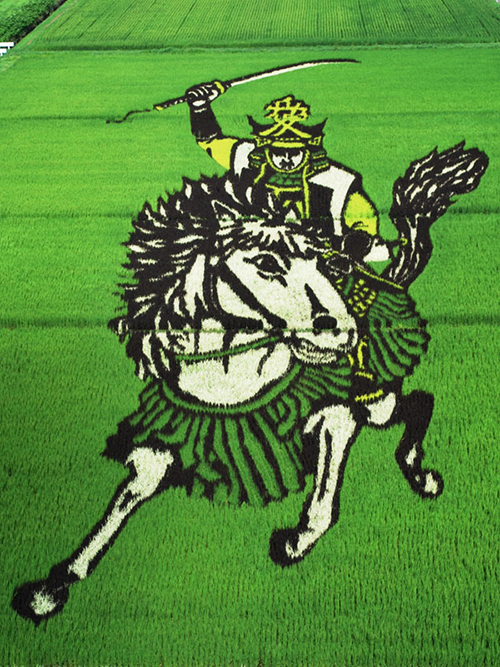 tanbo-japanese-rice-field-art-2